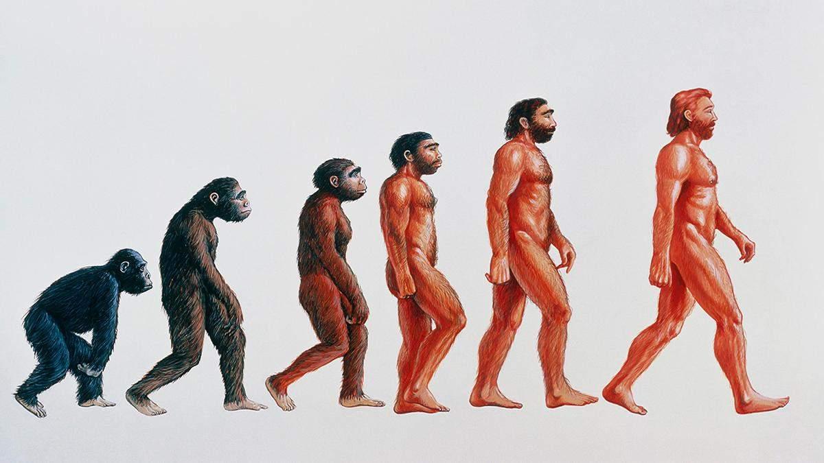 Чому люди почали ходити вертикально