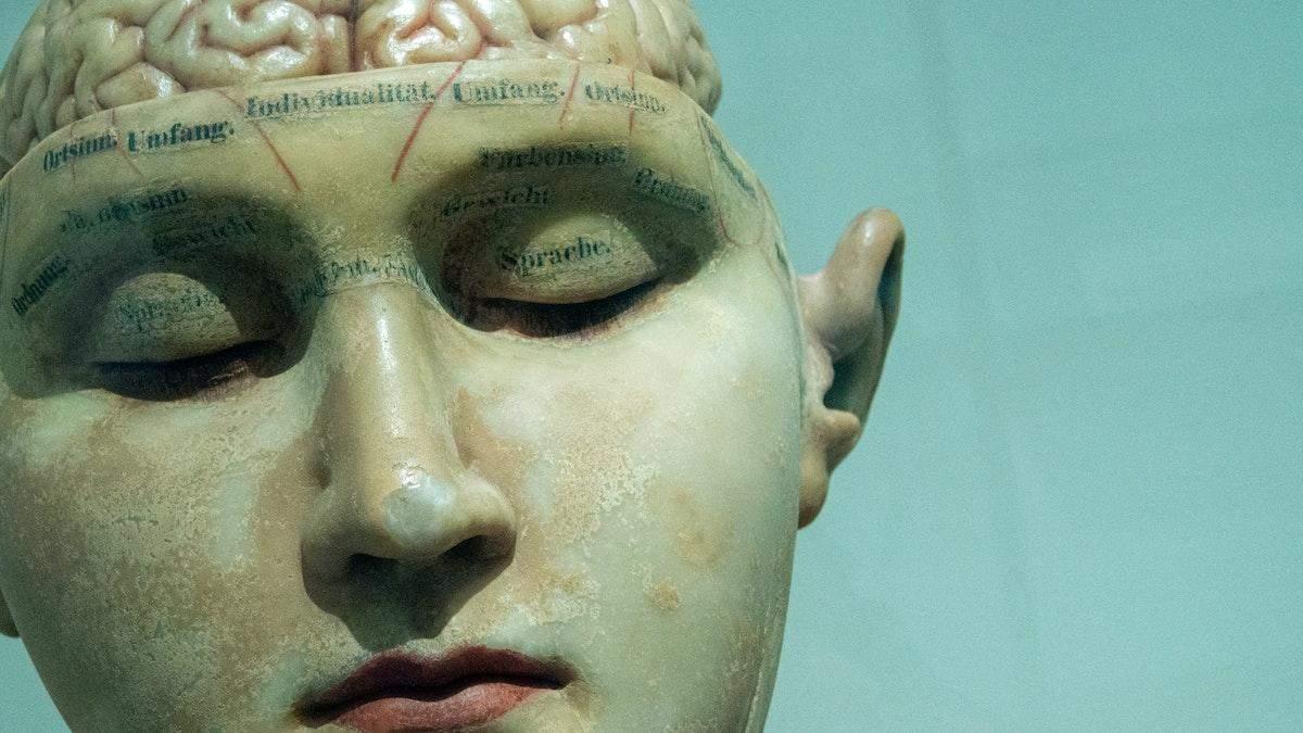 10 процентов мозга и 5 чувств: развенчиваем мифы о человеческом теле